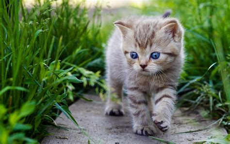 cat wallpaper gallery animal cat hd wallpapers and latest pictures photos gallery