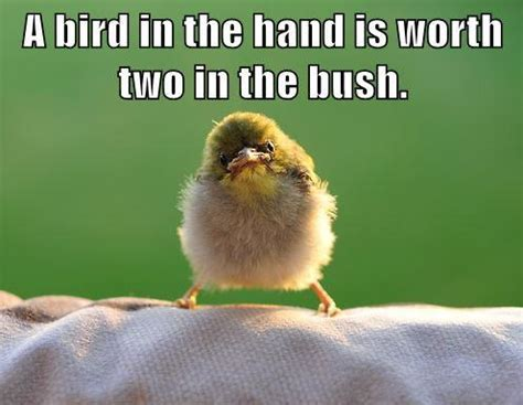 two in the bush bird quotes bird sayings bird picture quotes