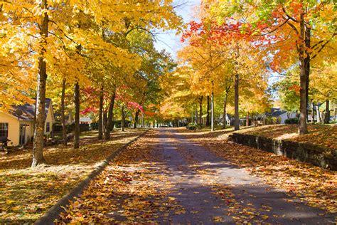in fall fall colors in nashville 2013 raj s orbit