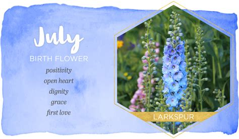 the color of water in july july birth flower larkspur ftd