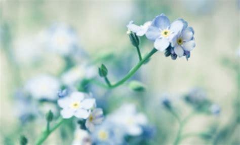 fiori bellissimi foto fiori bellissimi foto leitv
