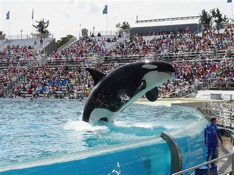 World S Whale Retailer Ends All Whale - seaworld ends captive of orcas at all its parks