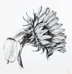 sunflowers south lake arts and photo