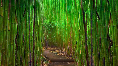 wallpaper abyss nature 85 bamboo hd wallpapers backgrounds wallpaper abyss