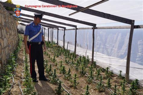 serra fiori quot troppe spese quot al posto dei fiori in serra 800 piante di