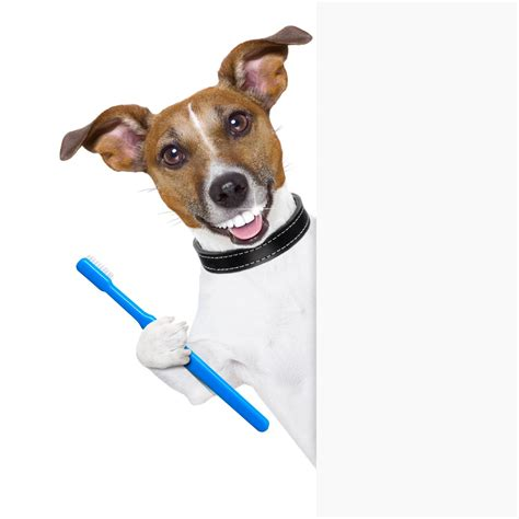 puppy toothbrush toothbrush for medium images