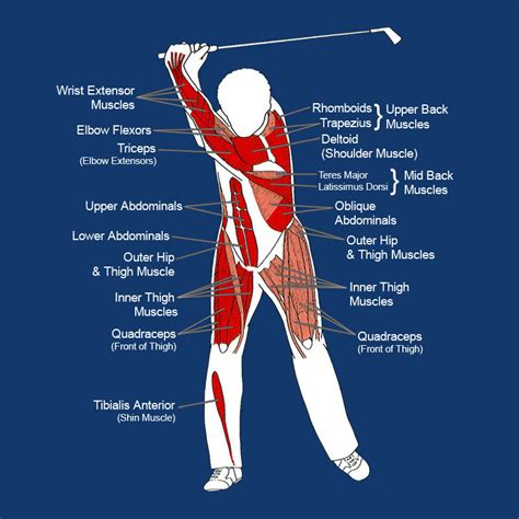 what muscles do you use to swing a bat golf fitness