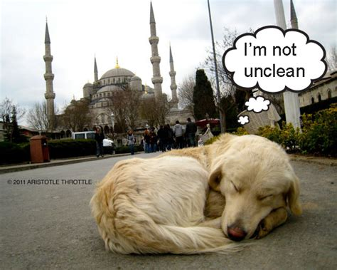 muslims dogs to muslims dogs are unclean but cats aren t