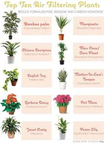 house plants for low light flowers plants and trees