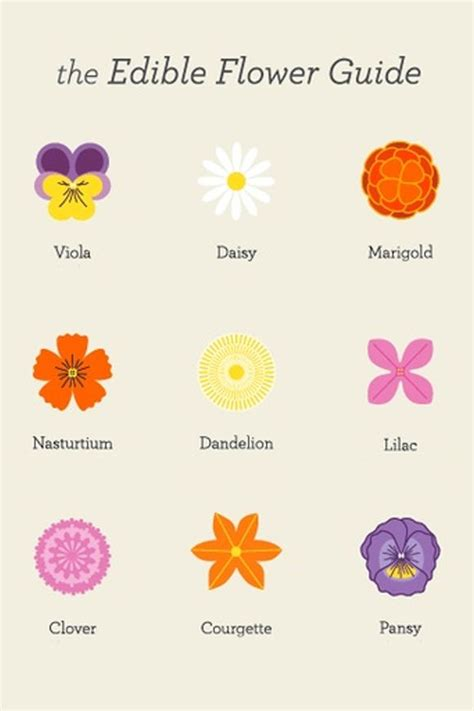 printable list of edible flowers 17 best images about edible flowers leaves used in