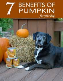 can dogs pumpkin 17 best ideas about canned pumpkin for dogs on food for dogs