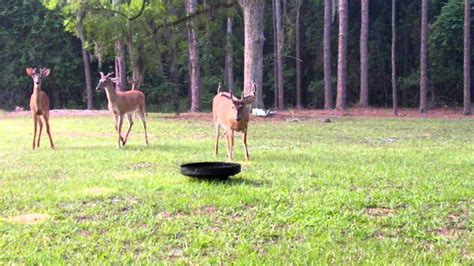Backyard Deer Feeder by Backyard Deer Feeder Outdoor Goods Gogo Papa