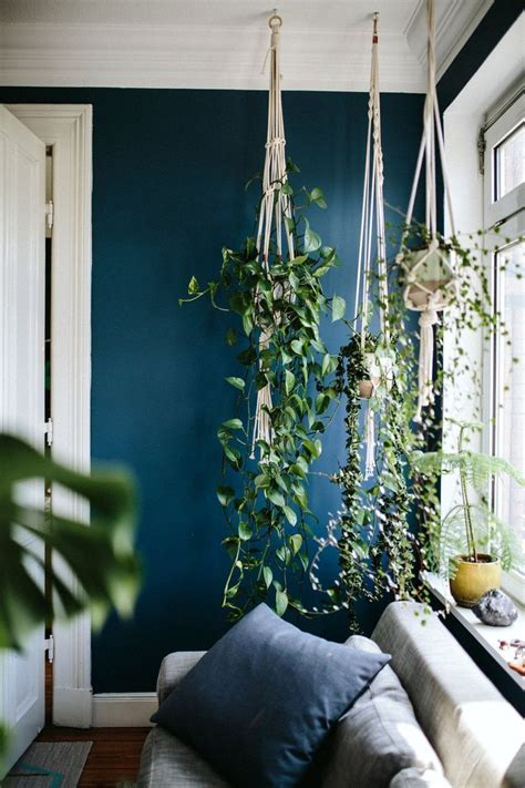 bedroom with beechwood floors dark green walls bedrooms best 25 indoor hanging plants ideas on pinterest