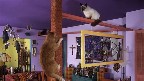 Cat In House by Elaborate Cat S House With Walkways Floor To Ceiling