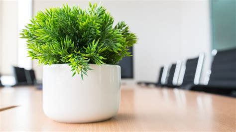 Best Desk Plant by 25 Office Plants That Fit On Your Desk Small Business Trends