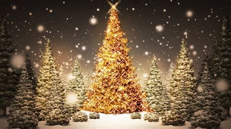 fantastic christmas trees wallpaper of trees 1080x607 hd wall