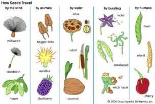 Birth Flower April - living things