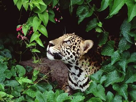tropical rainforest plants and animals rainforest - Animals And Plants That Live In The Tropical Rainforest