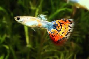 аквариумные рыбки презентация для детей