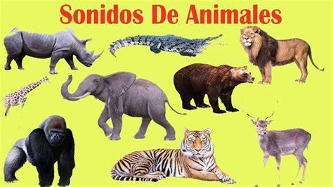 imagenes de animales jungla sonidos de animales de la selva para ni 241 os zaza tv youtube