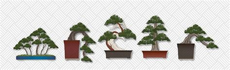 how to care for a tree at home bonsai tree care 8 tips for beginners infographic