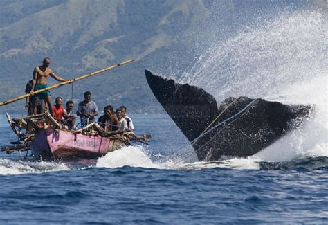 Dutch Colonials traditional whale hunters in indonesia a photo from nusa