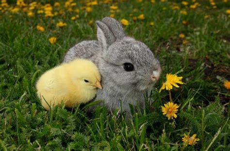 rabbit bunny happy easter inotternews