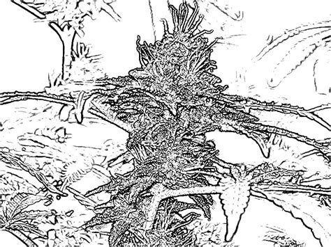 Marijuana Pages For Coloring Pages Trippy Pot Leaf Coloring Pages
