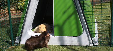 outdoor pig outdoor guinea pig run large outdoor guinea pig enclosure