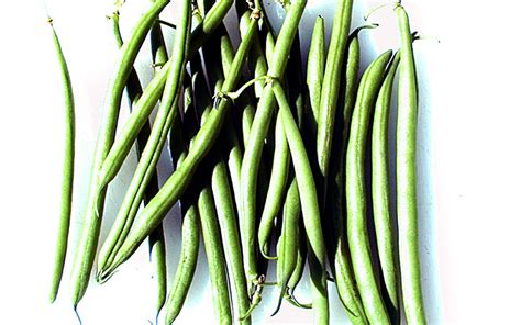 Beans and Legumes: Do they adhere to Paleo   Dr. Loren Cordain