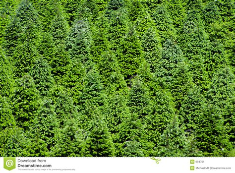 point pleasant christmas tree farm tree farm stock image image 694701