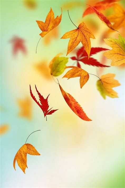 wallpaper for iphone leaves fall leaves iphone background iphone wallpapers pinterest