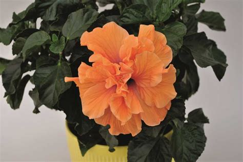 flowering plants for home garden 15 flowering foliage and tropical plants for the home and