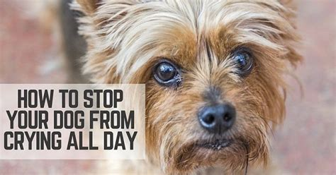 how to stop dog barking when left alone stop your dog from crying all day thatmutt com