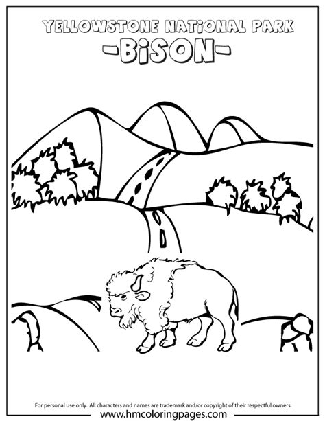 bison at yellowstone park in wyoming coloring page h m