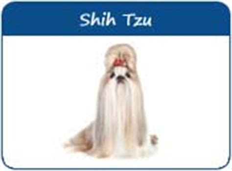 shih tzu names meanings shih tzu names shih tzu puppy names page 1