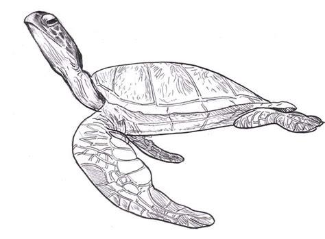 leatherback turtle coloring page sea turtle leatherback free coloring page download