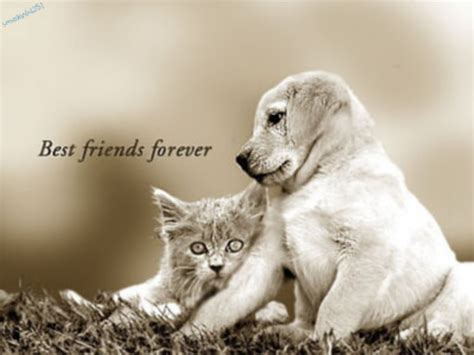 sivachan friends forever