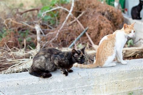 keep cats in backyard keeping stray cats out of your yard thriftyfun