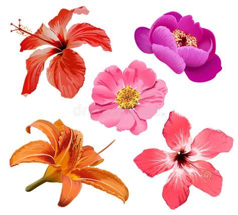 illustrazioni fiori i fiori vector l insieme illustrazione vettoriale