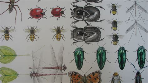 natural history painting all things bright beautiful cath hodsman british wildlife and natural history artist