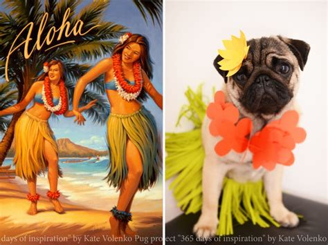 pug puppies oahu 782 best images about pugs and kisses on pug brindle pug and black pug