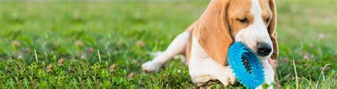 alimenti gatti cibo per cani cibo per gatti sementi e concimi petgreen