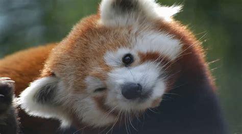 imagenes de animales lindos los 10 animales mas lindos del mundo ecomirada