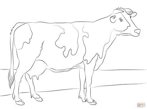realistic cow coloring page ausmalbild holstein rind ausmalbilder kostenlos zum