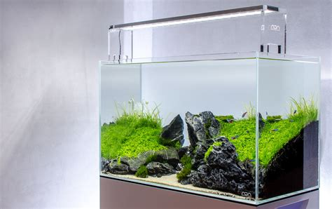 Aquascape Ada by The World S Best Photos Of 60p And Aquascape Flickr Hive