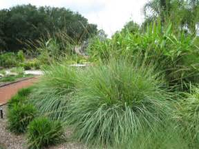 uf ifas extension polk gardening ten plants that beat