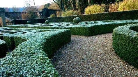 617 best images about buxus topiary hedges on