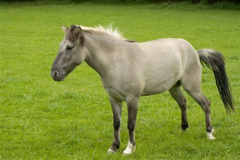 an horse top 15 myths about horses