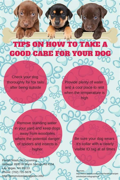 Great Tips On How To Tips On How To Take A Care For Your Pawsh Wash